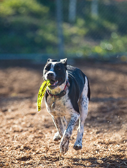 Bentley with Dogobie disc from Kelly Young-Wolff from Atherton CA