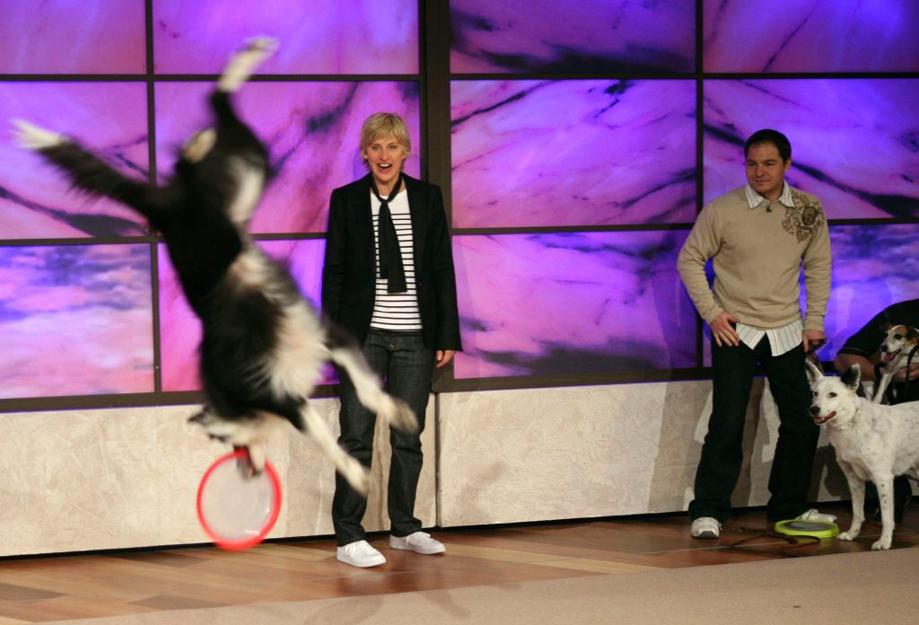 Chris Perondis stunt dogs on Ellen DeGeneres show