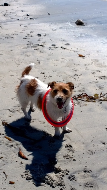 Harry wears his Sprint ring on a sunny day at the beach from Sue Habernigg